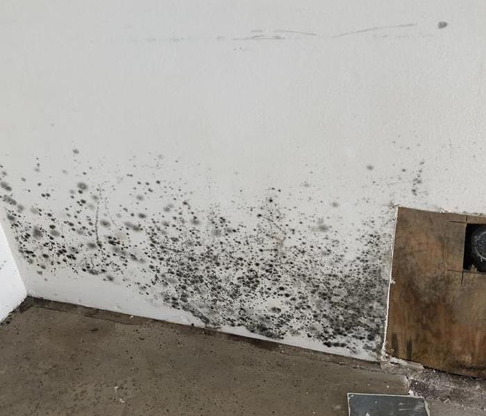Ewww!  Black Mold! - And How We Got Rid of It.