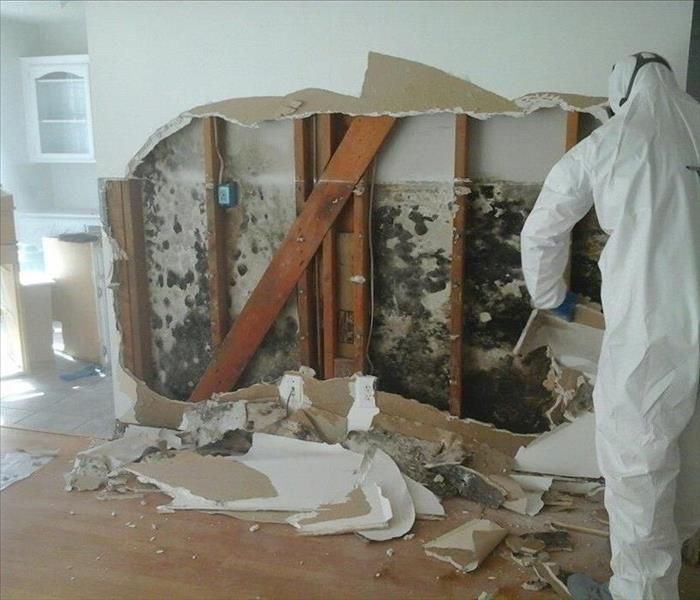 Mold Remediation Do you know the dangers related to mold in your home or business?